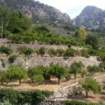 Mallorca-Fazit