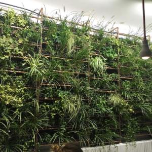 Die hängenden Gärten (Wand, tbh) von @laden_ein
